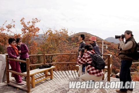 游客纷纷赞叹,今年八达岭红叶相当娇艳。(摄影