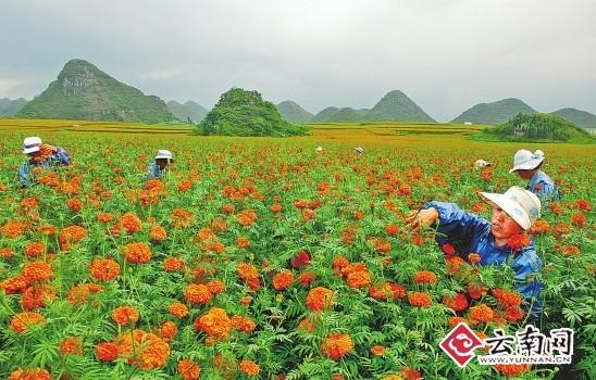云南农业�y�k��d_云南大力发展高原特色农业
