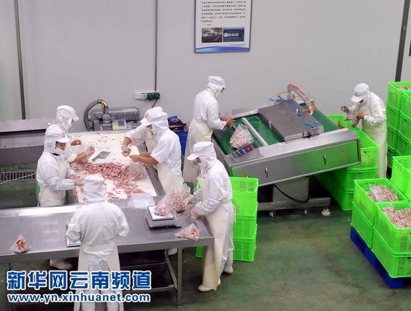 云南富源——畜牧养殖业拉动经济迅速增长