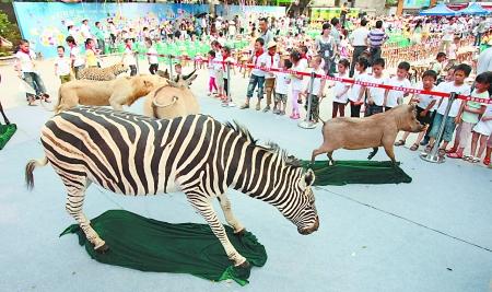 参观野生动物标本