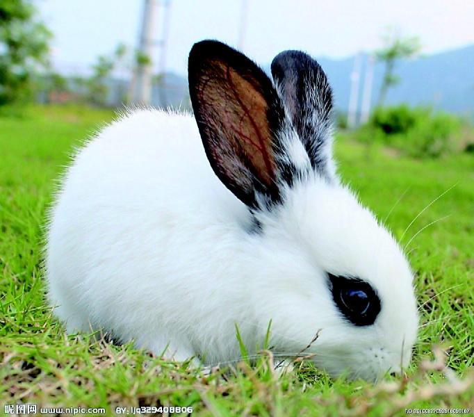 兔子洗手步骤图简笔画