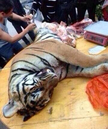 珍贵濒危野生动物制品罪