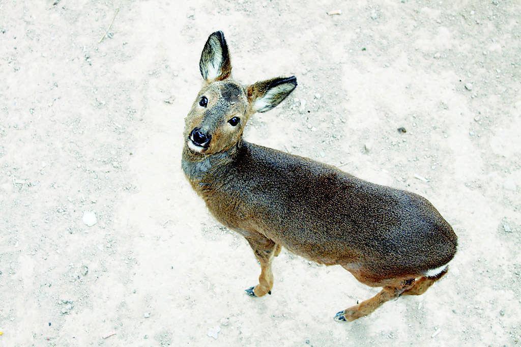 赵女士说,女儿特别喜欢小动物,之前家里已养了热带鱼,小白兔和小狗