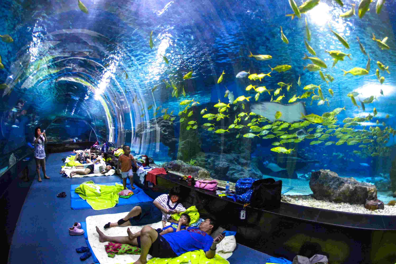 """8月1日,""""海底苍穹·鱼我共眠""""主题海洋夜活动在天津极地海洋馆举行"""